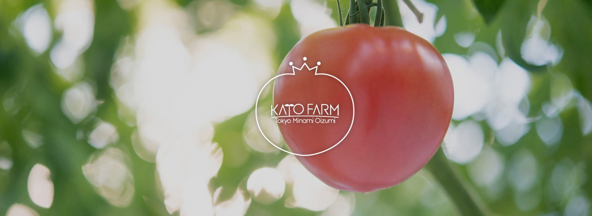 加藤トマトファーム(加藤農園)